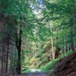 Bild Wald im Taunus