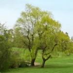 Naturschutzgebiete in Deutschland